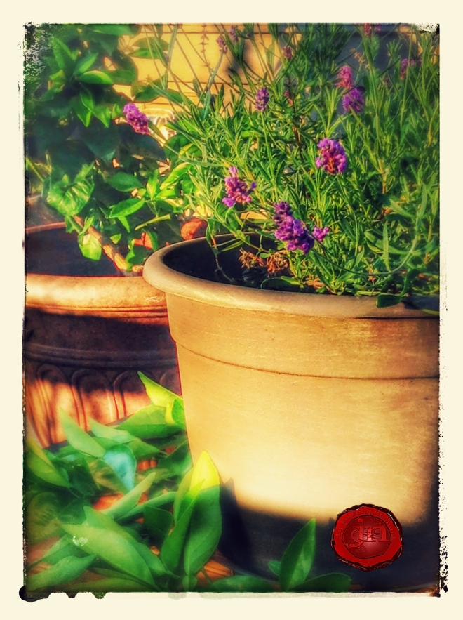 lavender and orange